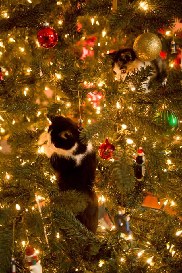 who else cant keep their cats out of their christmas tree send us