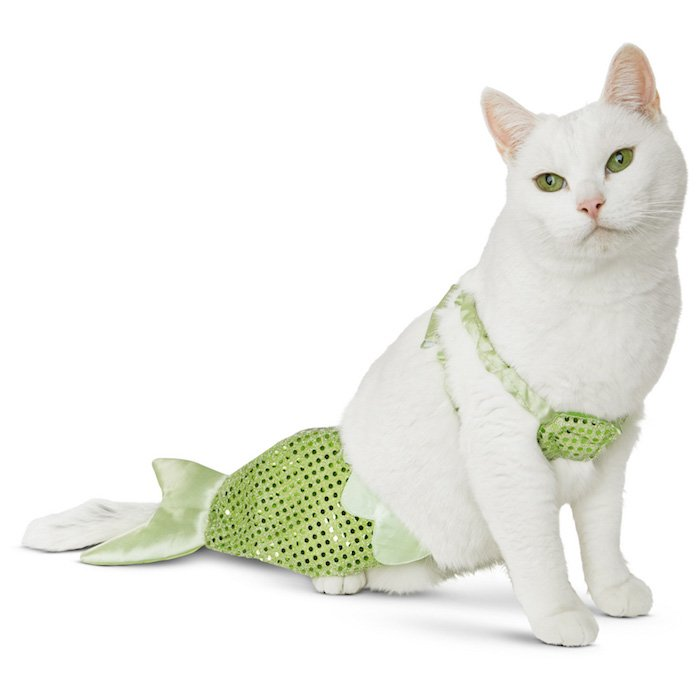 Top 25 Cat Halloween Costumes - Cat Fancast