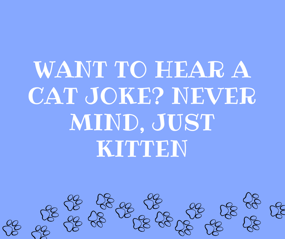 25 Cat Puns You Need Right Meow Cat Fancast