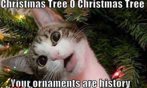 Cute cats attack christmas trees cat fancast cute cats voltagebd Images