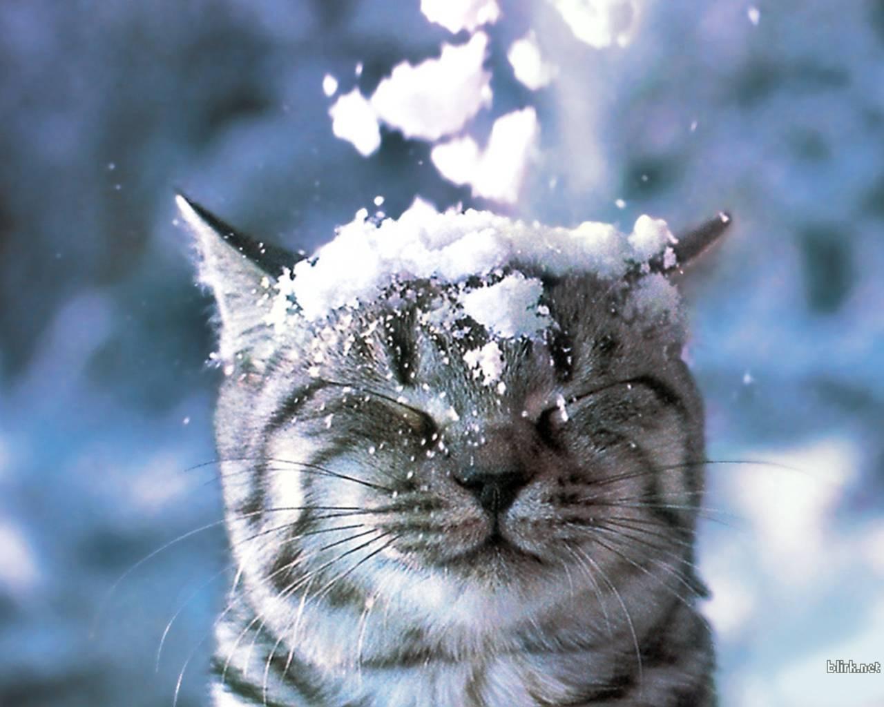 Résultats de recherche d'images pour «cat snow»