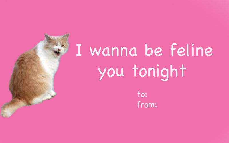 adorable cat themed valentines day cards