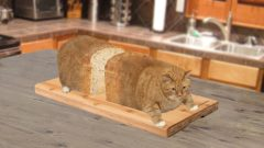 Cats Who Look Like Bread