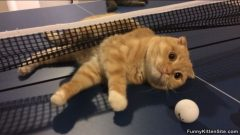 Funny Cats Playing Ping Pong