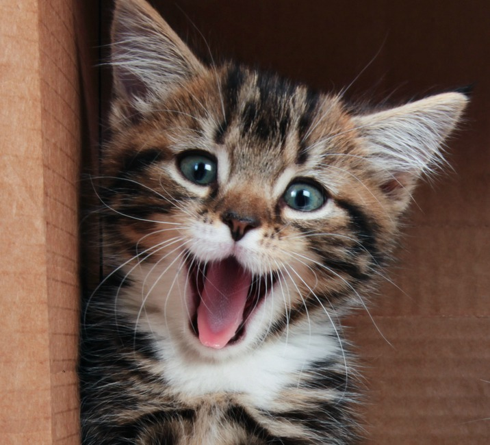 ADORABLE SMILING CATS WILL IMPROVE YOUR DAY - Cat Fancast
