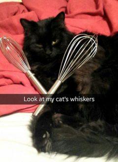 snapchat cats