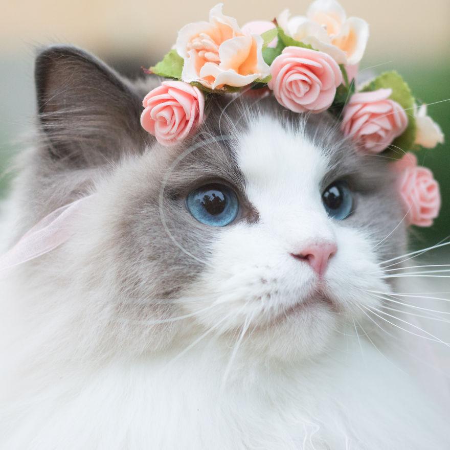 photogenic cat