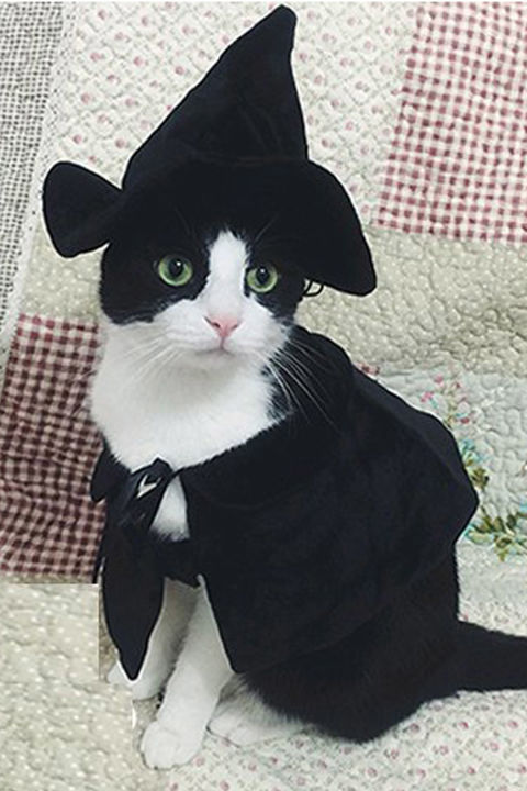 Adorable Halloween Cats Will Put A Smile On Your Face - Cat Fancast