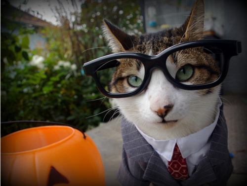 Business-Cat-Halloween-Costume.png & Business-Cat-Halloween-Costume.png - Cat Fancast