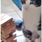 This Cat Is Suspiciously Good at Jenga