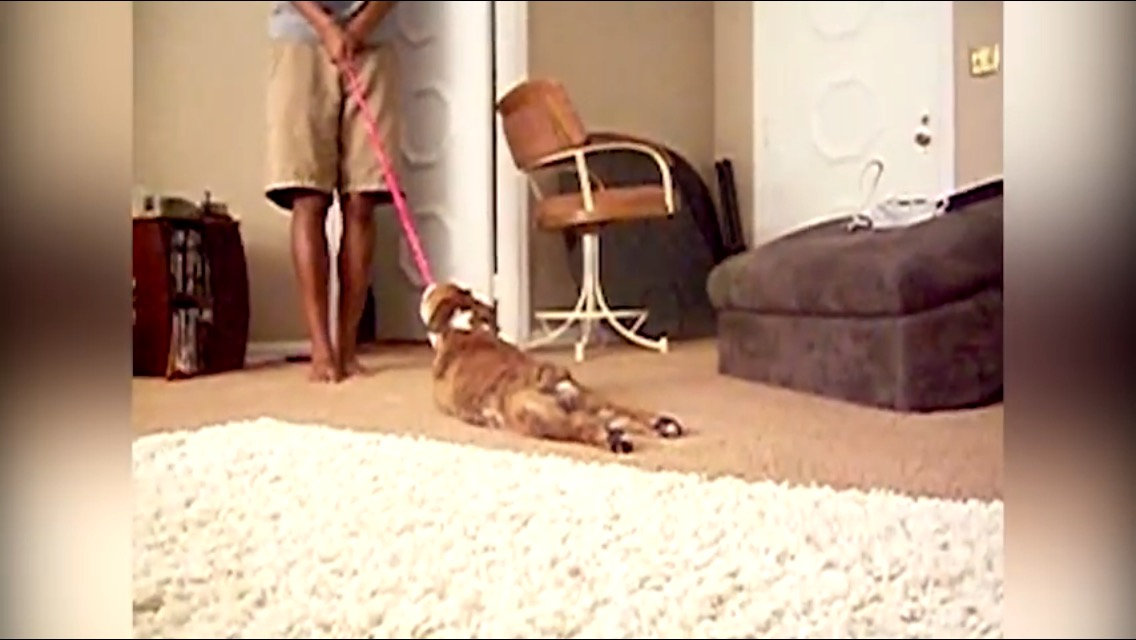 Dog Doesn T Want To Go For A Walk Dog Fancast