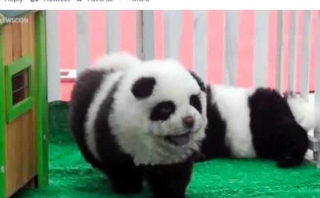the panda dog rage dog fancast
