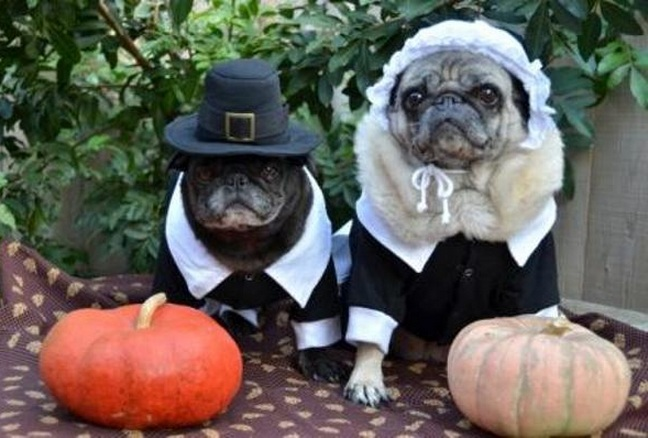 Thanksgiving & Adorable Dogs Celebrate Thanksgiving - Dog Fancast