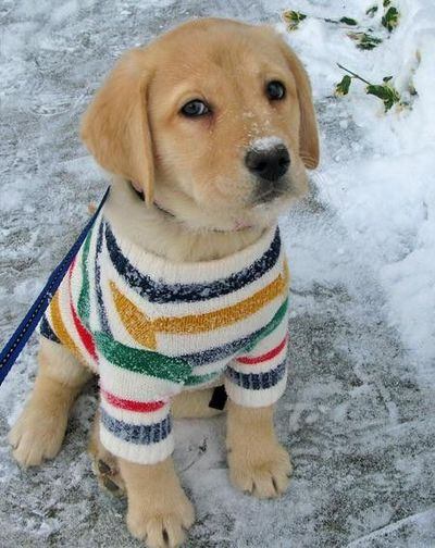 Chilly Temperatures Are Perfect For Dog Sweaters , Dog Fancast