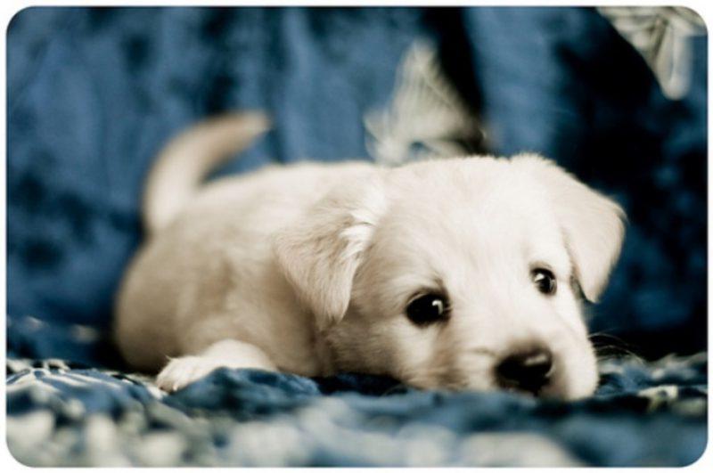 Cute Puppy Dog Eyes That Will Melt Your Heart Dog Fancast