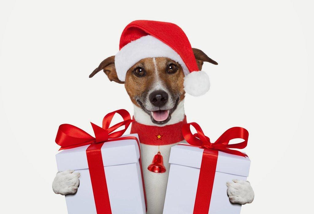 dog christmas present ideas