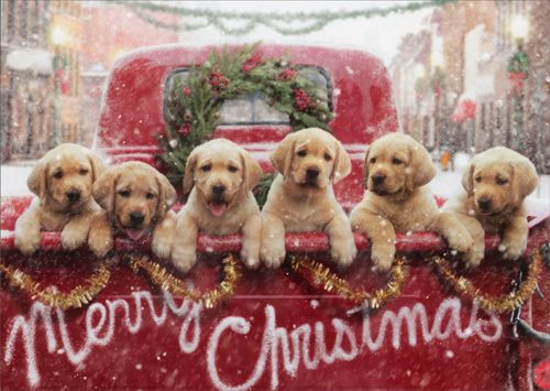 well dressed dogs ready for christmas dog fancast