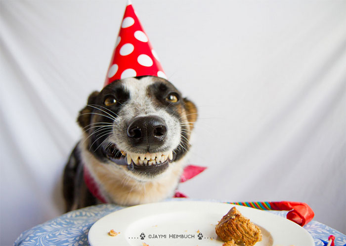 Adorably Awesome Dog Birthday Celebrations