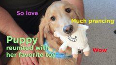 dog toy