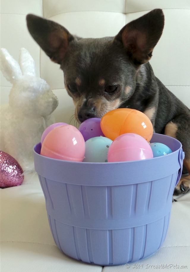 Adorable gifts for your dogs easter basket dog fancast grab an easter basket and fill it up negle Images