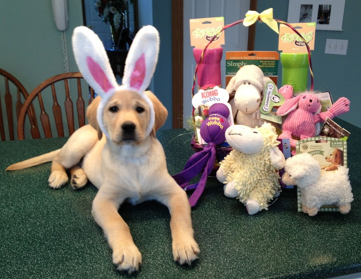 Adorable gifts for your dogs easter basket dog fancast easter basket negle Gallery