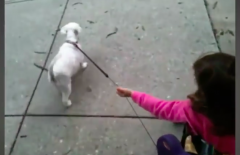 Babies Who Stroll With Dogs
