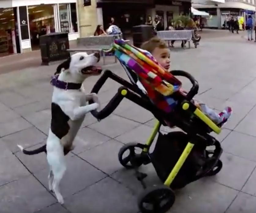 5 Loyal Nanny Dogs Taking Care Of Babies Dog Fancast