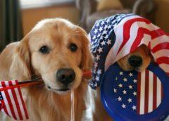 patriotic puppies
