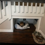 Man Builds A Beautiful Bedroom For His Pet Dog