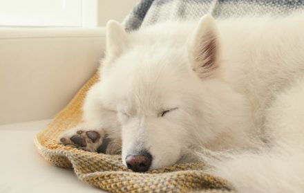relaxing sounds for dogs