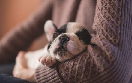 dog sleep with you