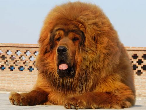 Don't miss these 11 dog breeds you've probably never heard ...