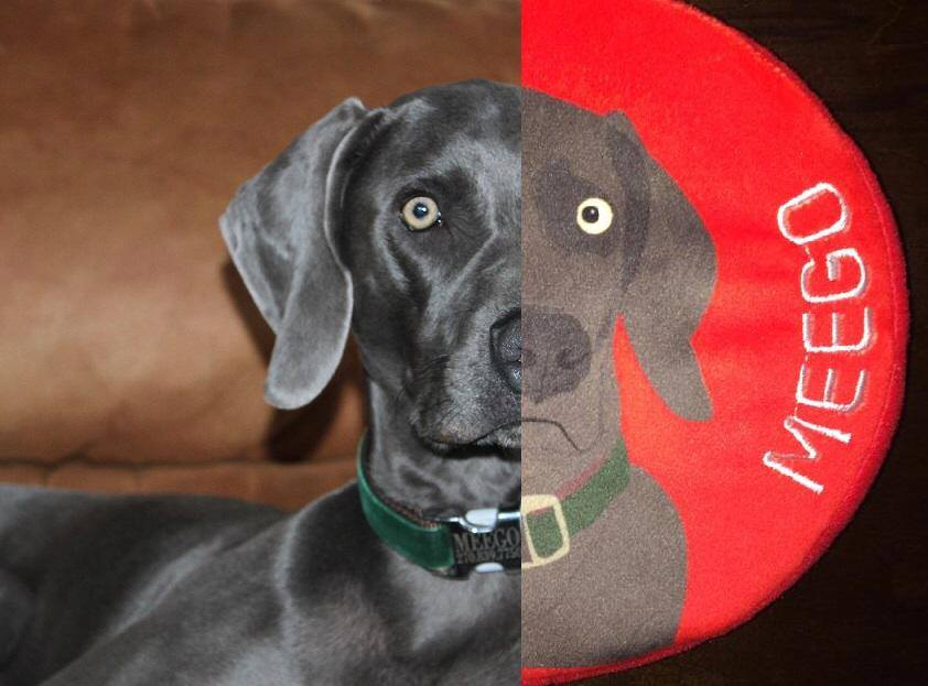 personalized dog toys