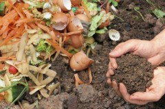 Gardening on a Budget? Check out these tips and tricks…