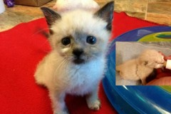 Read the story of cute kitten Tanzy here….