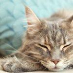 sleep music for cats