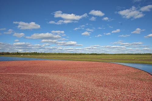 Secret Lives of Cranberry Farmers