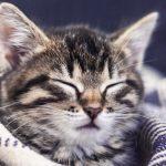 cat sleep with you