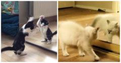 Cats versus Mirrors