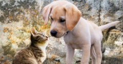 Kittens and Dogs