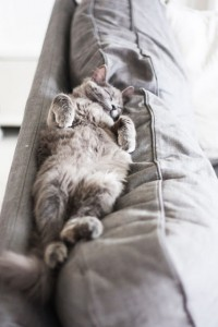 35 funny photos of cats caught sleeping  cat fancast