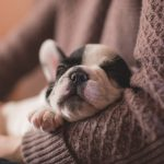 Should Your Dog Sleep with You in Bed?