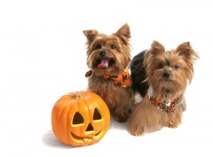 It's Halloween Costume Time for Your Pup!