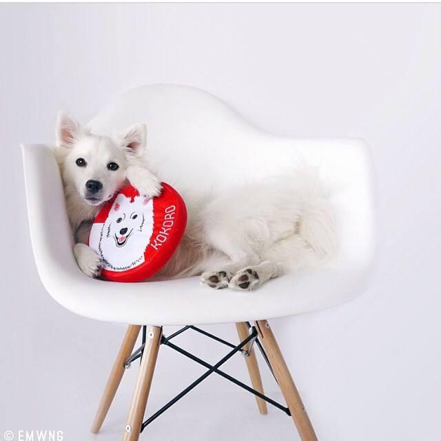 personalized dog toys