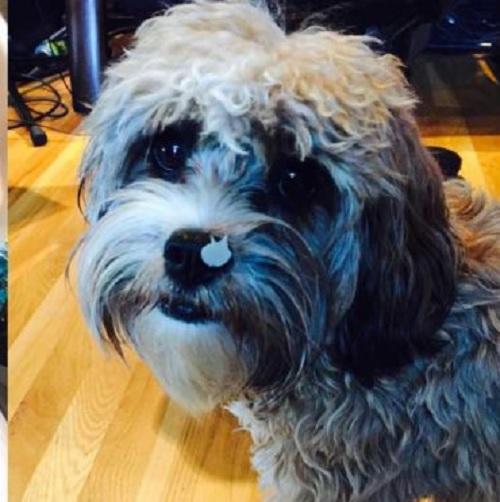 Kim Paisley Dog