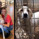 luke bryan's foster dog