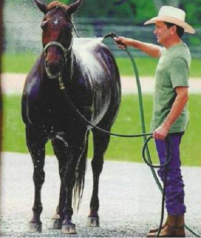 George Strait Horses