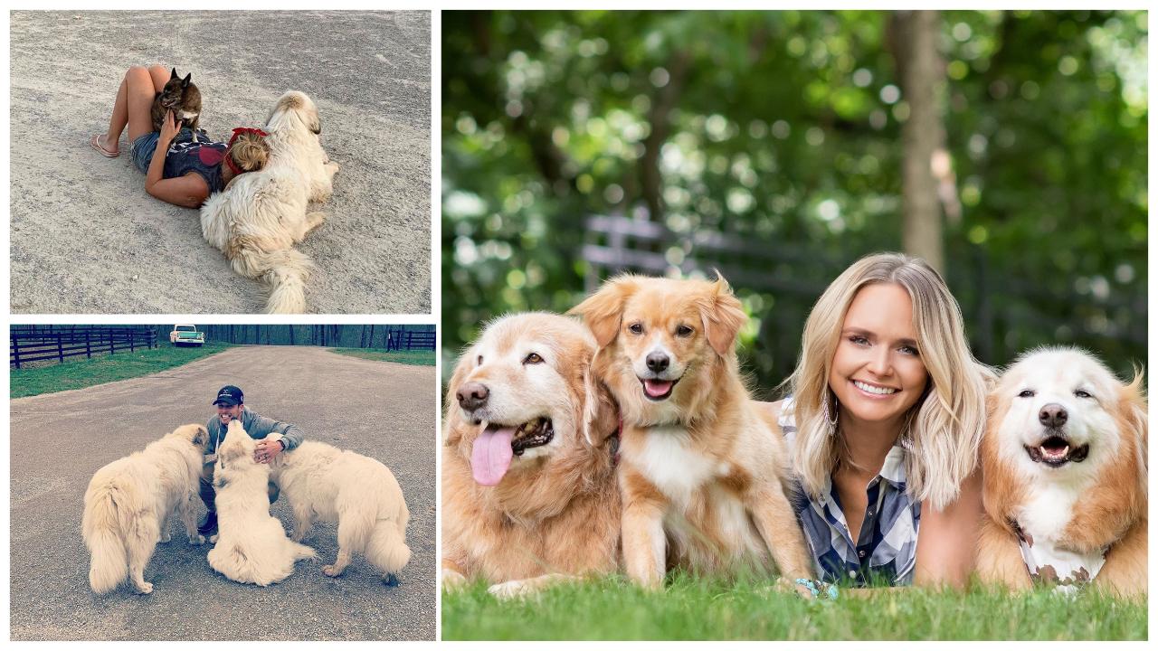 Miranda Lambert's Dogs