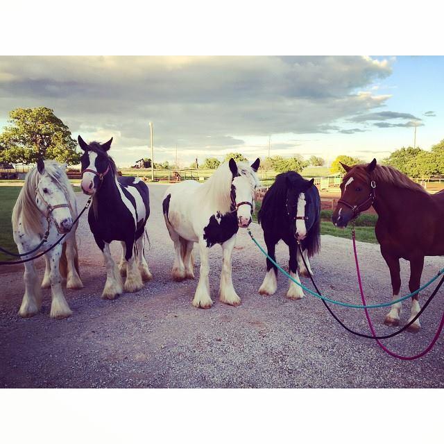 Miranda Lambert Horses