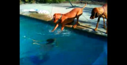 These dogs are upset when the kid dives underwater and one of them tries to rescue him…
